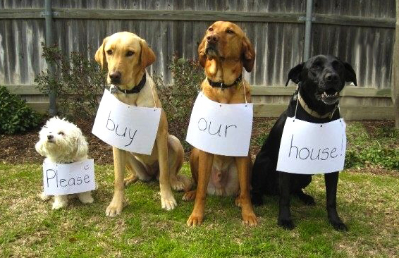 dogs-for-sale.jpg